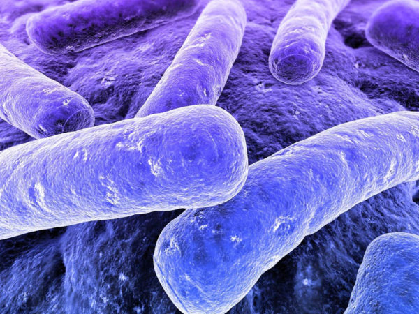 battling superbugs the evolutionary way