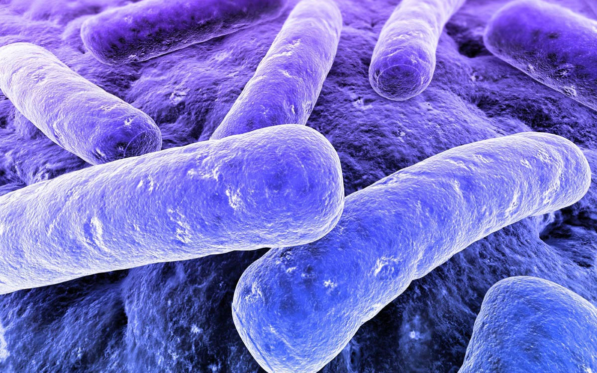 bacteria render