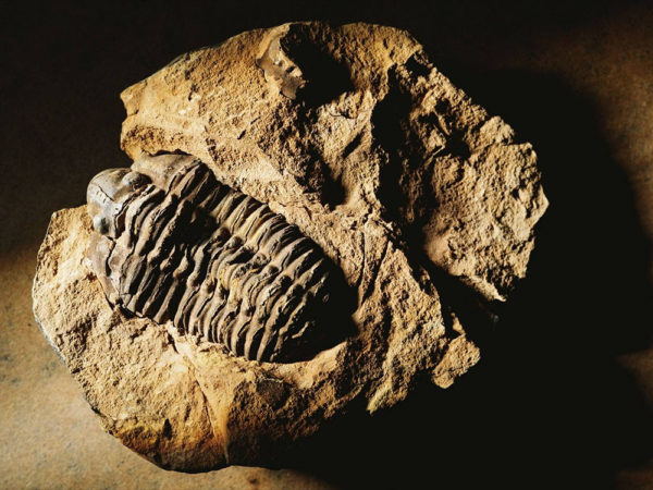 south korea tells creationists to back off