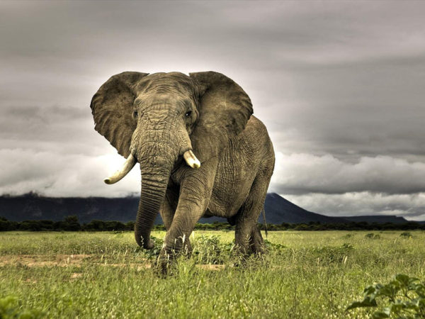 what do we do with what elephants taught us about preventing cancers?