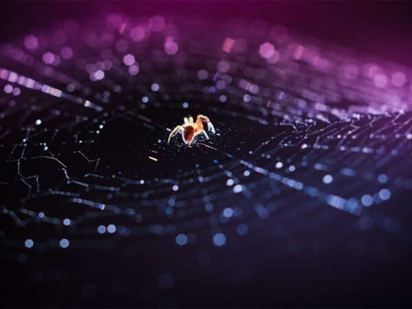 what spiders could teach us about the evolution of brains and intelligence