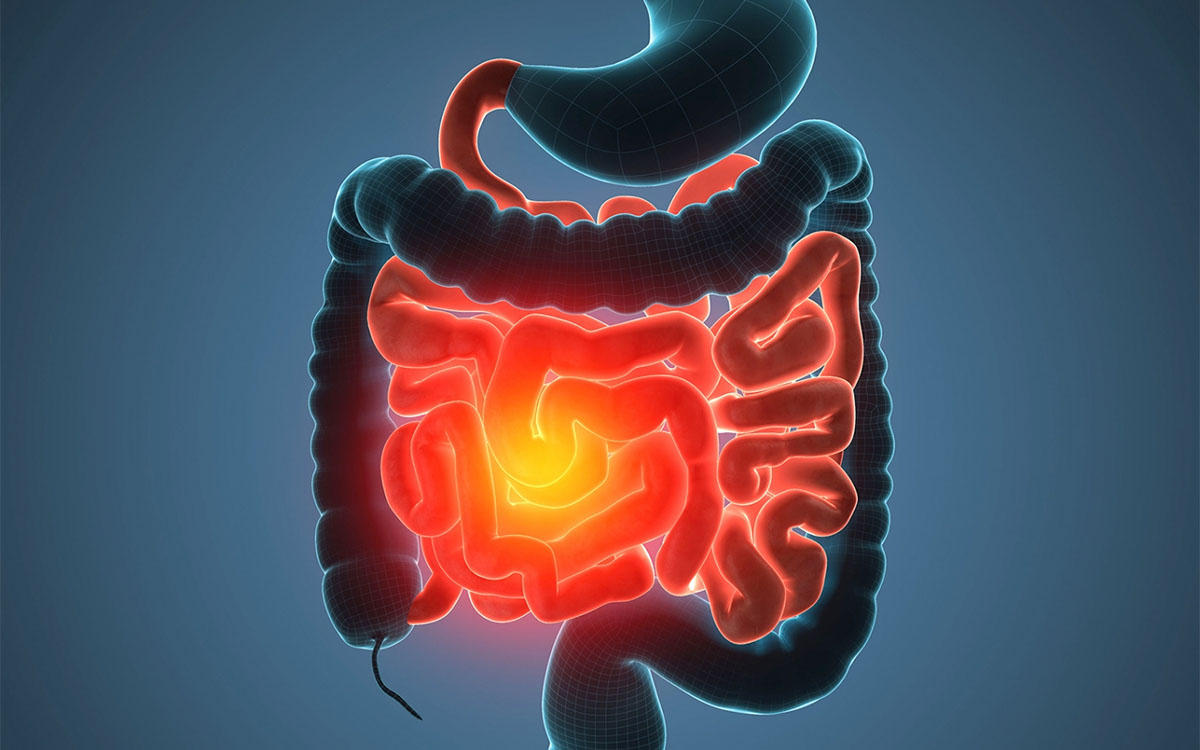human digestive tract 3d render