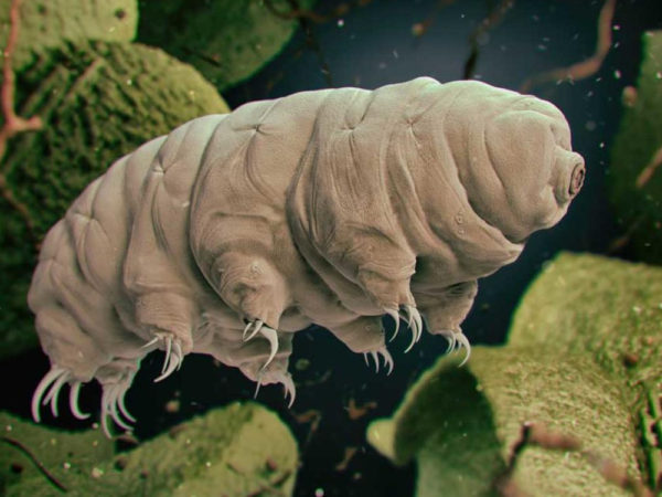 world of weird things podcast: are we getting our germs all over space?