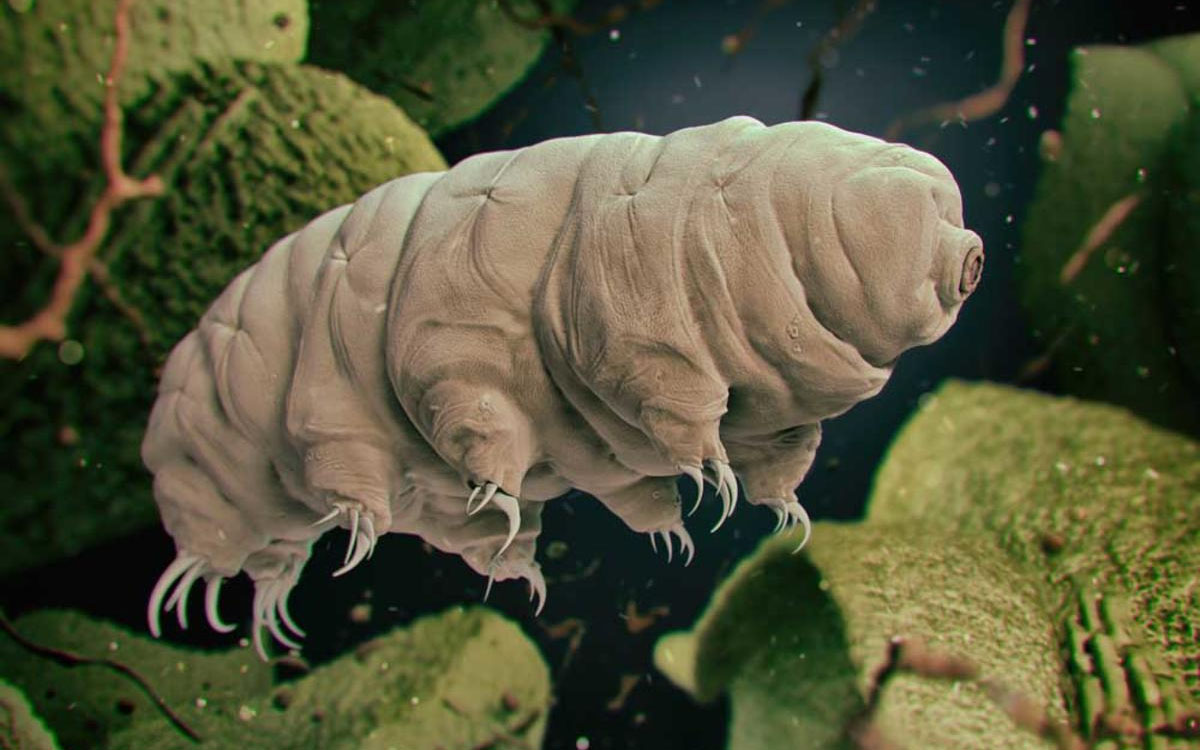 swimming tardigrade