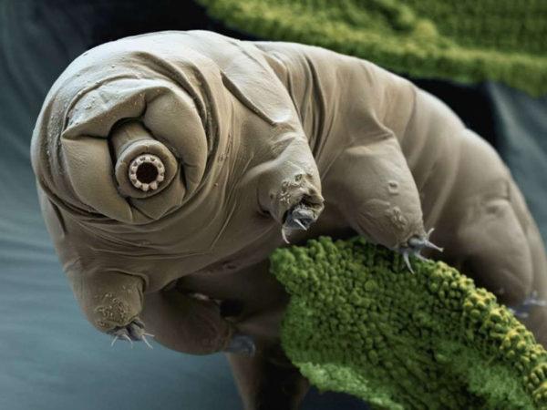 the planet's toughest creatures