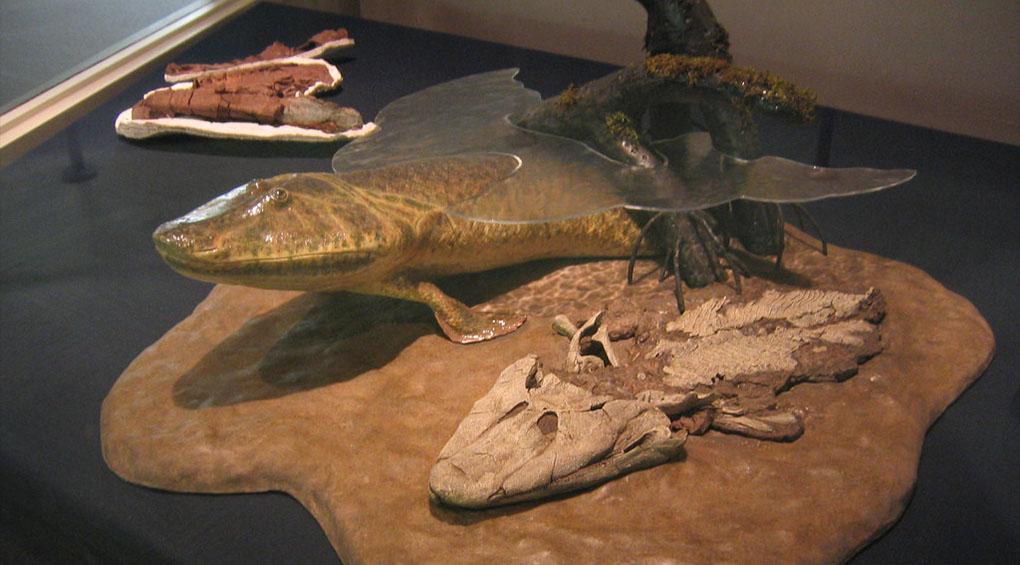 tiktaalik exhibit